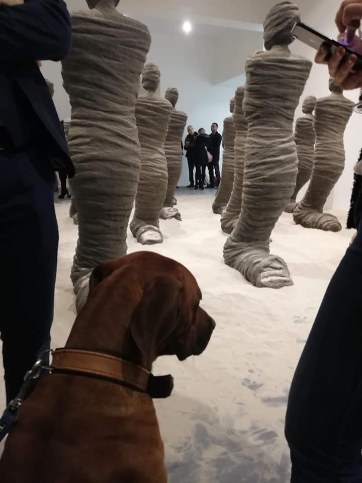 Hund Fritz von Tobias